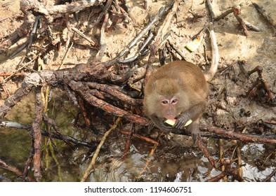 Cute Monkey eating Watermelon