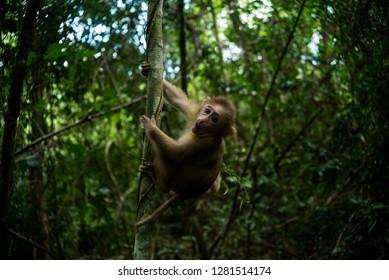 Cute monkey in forest