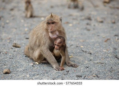 Cute monkey mother and baby sitting together and watching in one direction