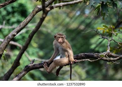 A cute Monkey on the tree ,Monkey Climbing Tree.