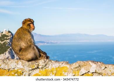 Cute monkey sitting on a rock in Gibraltar