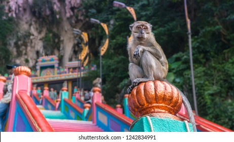 Cute monkey sitting on the stairs in foreground. Tourists feeding monkeys on colourful staircase at Hindu temple. Shot in Batu Caves, Kuala Lumpur, Malaysia, Asia.
