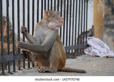 cute monkey sitting. monkey portrait