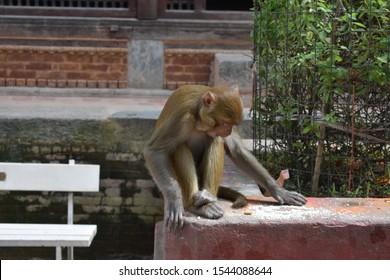Cute monkey at the Monkey Temple in Kathmandu, Nepal