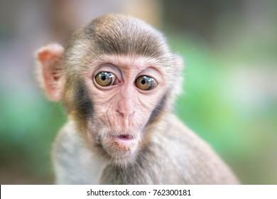 cute monkey wondering