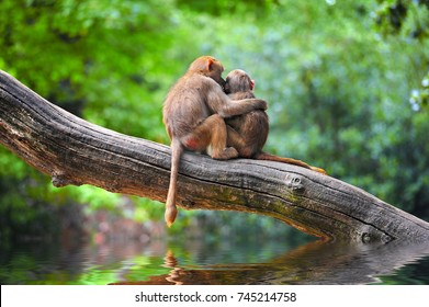 Cute monkeys embracing on tree
