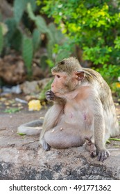 Cute monkeys A cute monkey lives in a natural forest of Thailand.  - Shutterstock ID 491771362