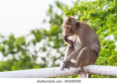 Cute monkeys A cute monkey lives in a natural forest of Thailand.  - Shutterstock ID 492583930