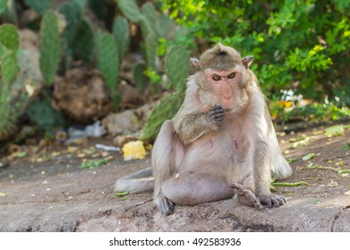 Cute monkeys A cute monkey lives in a natural forest of Thailand.  - Shutterstock ID 492583936