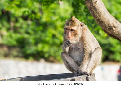 Cute monkeys A cute monkey lives in a natural forest of Thailand.  - Shutterstock ID 492583939