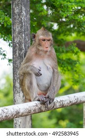 Cute monkeys A cute monkey lives in a natural forest of Thailand.  - Shutterstock ID 492583945