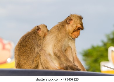 Cute monkeys A cute monkey lives in a natural forest of Thailand.  - Shutterstock ID 493409125