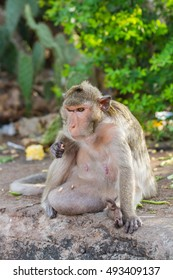 Cute monkeys A cute monkey lives in a natural forest of Thailand.  - Shutterstock ID 493409137