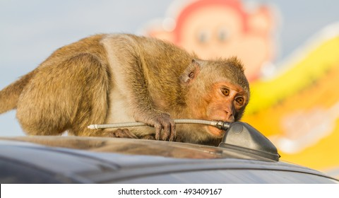 Cute monkeys A cute monkey lives in a natural forest of Thailand.  - Shutterstock ID 493409167