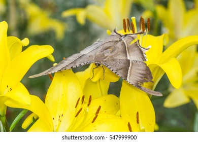 cute moth on lily flower