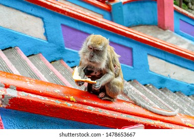 Cute Mother holding baby monkey of Batu Cave sitting at temple golden statue of Lord Muragan at Hindu shrine, Kuala Lumpur.