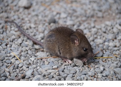 Cute mouse resting