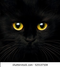 Cute muzzle of a black cat closeup
