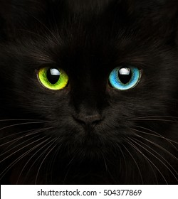 Cute muzzle of a black cat with eyes of different colors closeup