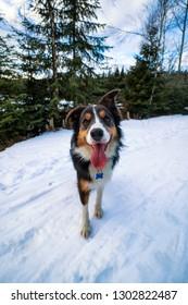 Cute Nessie dog in a snowy landscape near a mountain stream