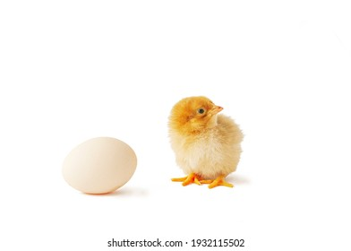 Cute newborn chicken and egg isolated on white with shadow.