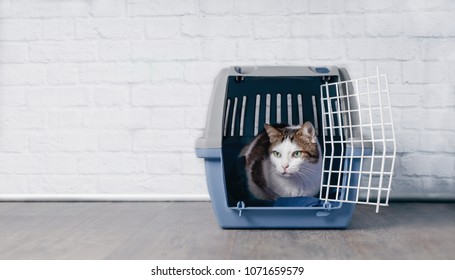 Cute old tabby cat sitting in a travel crate and look sideways.