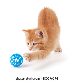 Cute orange kitten with large paws playing with a toy on a white background.
