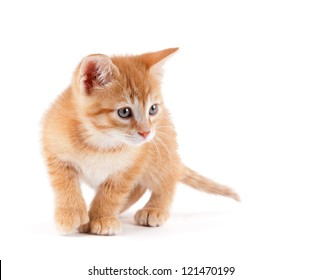 Cute orange kitten with large paws playing on a white background.