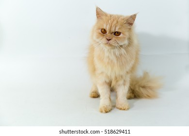 Cute orange kitten with large paws sitting next to a toy on a white background.