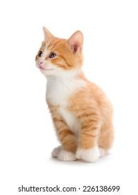 Cute orange kitten looking up isolated on white.