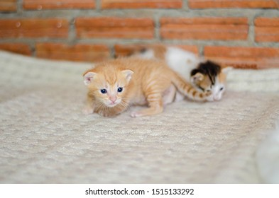 Cute orange kitten sleeping on a white cloth.A small kitten is learning to walk.Do not focus on the main object of this image.