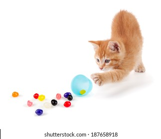 Cute Orange Kitten spilling colorful jellybeans out of a plastic Easter egg isolated on a white background.