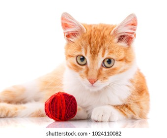 Cute orange kitten with white paws sitting next to a toy on a white background.