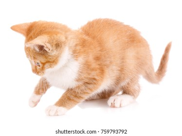 Cute orange kitten with white paws on a white background.