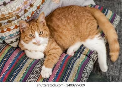 Cute orange tabby cat kitten looking at the camera
