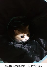 Cute orange or yellow British short hair cat hidden in the dark inside the plastic bag. Light and shadow on the cat's face looking curiously. Abstract, cat, cute, sad, stress and lonely concept.