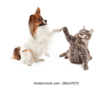 A cute Papillon dog and cat raising their paws to high five