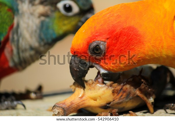 Cute parrot enjoying eating food with friend