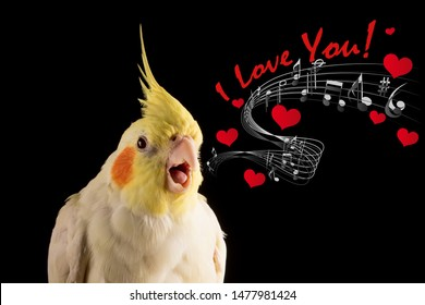 "Cute Parrot Memes, Cockatiel Portrait Singing ""I Love you"" with hearts and music notes, meme, props"