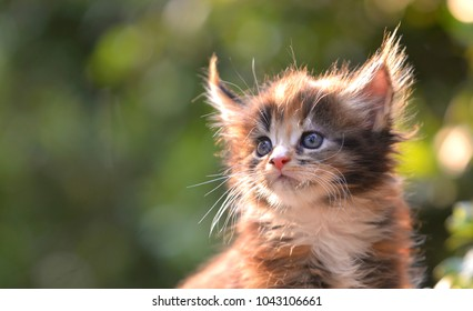 A cute patched blue eyes kitten sitting on a wooden floor behind sun ray blurry with green garden