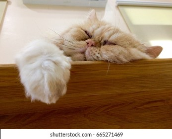 A cute Persian cat is sleeping on the dining table