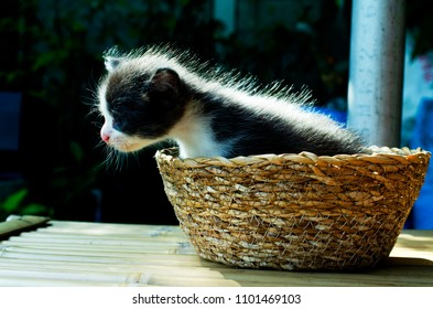 Cute pet with baby cat or kitten on basket