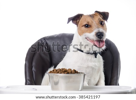 Cute Pet Dog Dry Food Bowl Stock Photo Edit Now 385421197