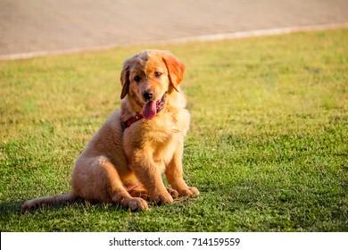 Cute pet in the grass