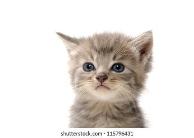 Cute pet tabby baby kitten on white background