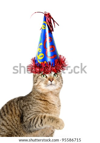 Cute Pet Tabby Cat With Birthday Party Hat Sitting On White Background