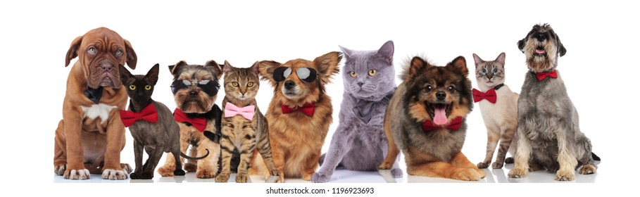 cute pets of different breeds with bowties and sunglasses standing, sitting and lying on white background