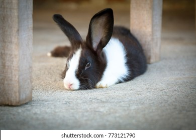 Cute photo of black and white hair bunny.