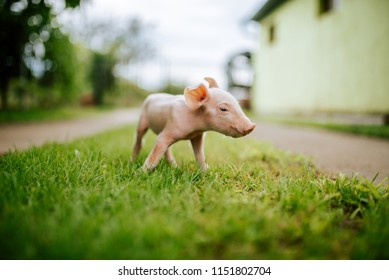 Cute piglet on the grass on a farm.
