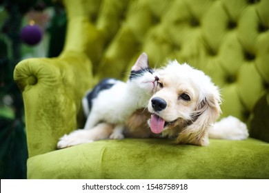 Cute playful dog and cat playing and rubbing each other on a green couch.Christmas tree with purple ball ornament.Cocker spaniel domestic pet.Animal friendship.Happiness.Adorable friends.